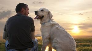 Touching Dog Stories