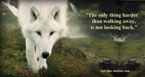The Beauty of wolves Love. Lost.