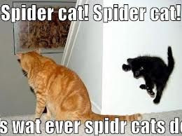 funny spider quotes - Google Search
