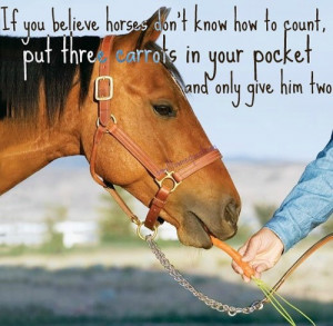 Go Back > Gallery For > Funny Horse Quotes Tumblr