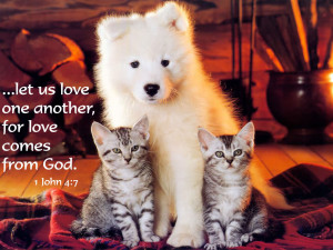 Let Us Love one another for love Comes from God – Bible Quote