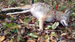 ... 11, 2013 by huntography in Deertour , Iowa Whitetail Deer Hunting Blog