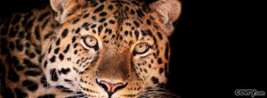 facebook covers magnificent leopard cover
