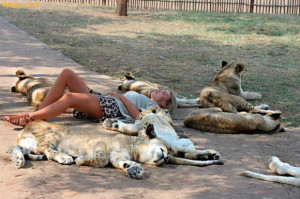 Animals - Relaxation and courage