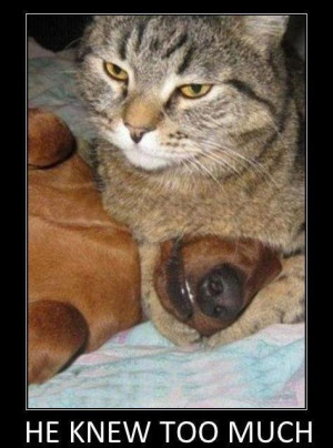If you enjoyed this, check out our Best Funny LOLcat Gallery