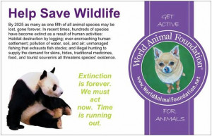 protect animals from becoming extinct essay help