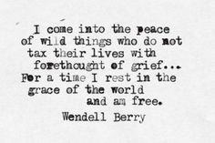quote about freedom, by Wendell Berry