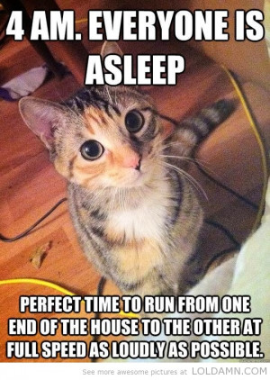 Everyone is a Sleep Funny Cat Quotes