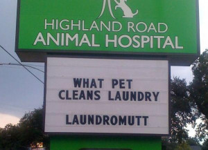 Vet With a Great Sense of Humor