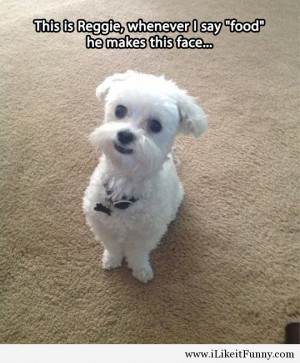 cute dog call food face