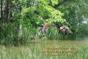 timothy 6:6 – Contentment Papel de Parede Imagem