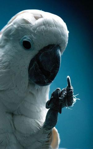 Funny Magician Cruise Ship Parrot Joke