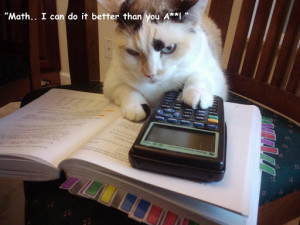 cat-studying-maths The Studious Cat