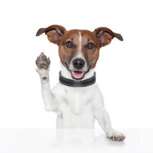 ... com/royalty-free-stock-photo-hello-goodbye-high-five-dog-image26693145