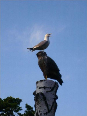 Funny gull pictures