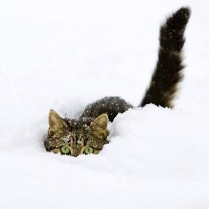Free Cat cruising the snow wallpaper for iPad 2