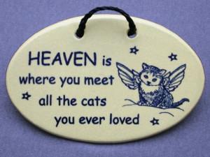 cat sympathy quotes