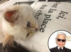 Karl Lagerfeld Twitter, Choupette