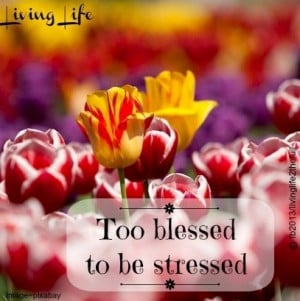 Too blessed to be stressed quote via Living Life at www.Facebook.com ...