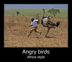 Angry Birds: African Style