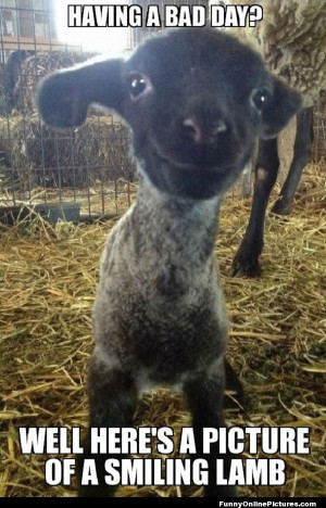Top 25 Best Funny Animal Quotes