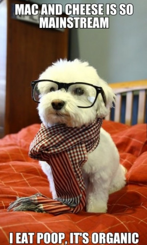 funny-picture-hipster-dog-vegan