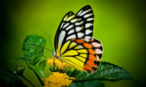 Chaos theory says that a minor event such as a butterfly flapping its ...