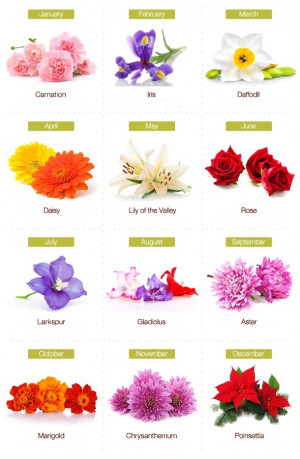 december birth month flower meaning