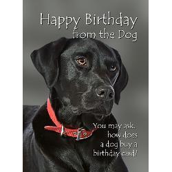 Black Lab Birthday Greeting Cards Card Ideas Sayings Designs