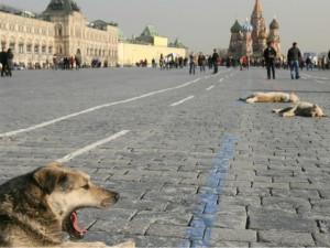 Russia's homeless animals