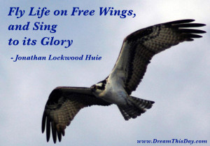 Fly Life on Free Wings, and Sing to its Glory.