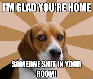 Funny Beagle Meme Dog Beagle Meme