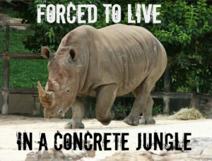 Keeping animals in zoos good or bad