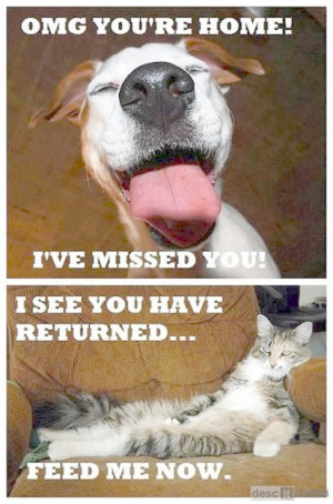 Pet Quotes Back to Pets / Back Home