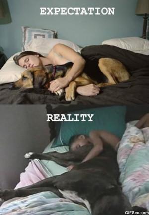 Funny-Sleeping-with-dogs.jpg
