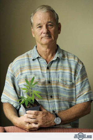 Bill Murray Legalize Weed