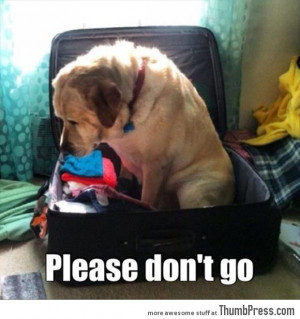 Funny Animal Pictures 43