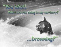 warrior cat pics version 15 ethereal epilogue more warriors quotes ...