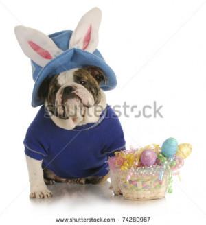 easter dog - english bulldog dressed up for easter on white background ...