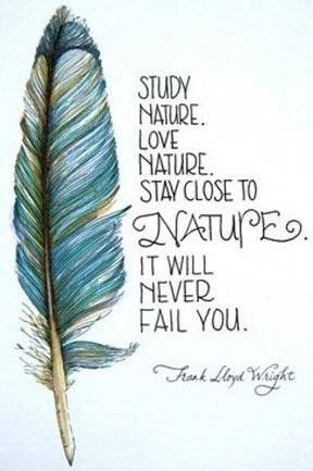 Frank Lloyd Wright quote, nature Frank Lloyd Wright #Historia #Arte # ...