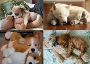 puppies-cuddling-with-stuffed-animals-CO-300x214.jpg