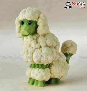 Cauliflower Dog Food Art