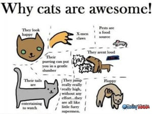 Cats_Are_Awesome_funny_picture
