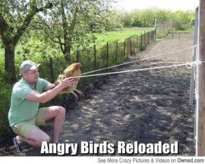 Top 20 most funny Angry birds memes and Jokes . .. #Hilarious #Funny # ...