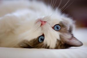 Биологи считают кошек самыми ...