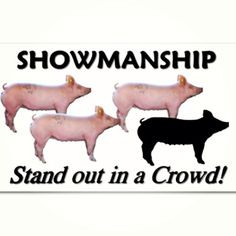 Pig Livestock Show Quotes