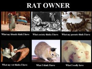 Los propietarios de ratas, esos incomprendidos...