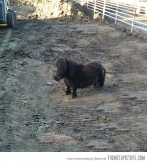 Funny photos funny pony horse midget cute