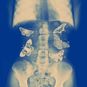 Butterflies In Stomach Quotes Tumblr