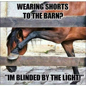 Funny Horse Quotes - Funny Friday - May 30 2014 | Savvy Horsewoman